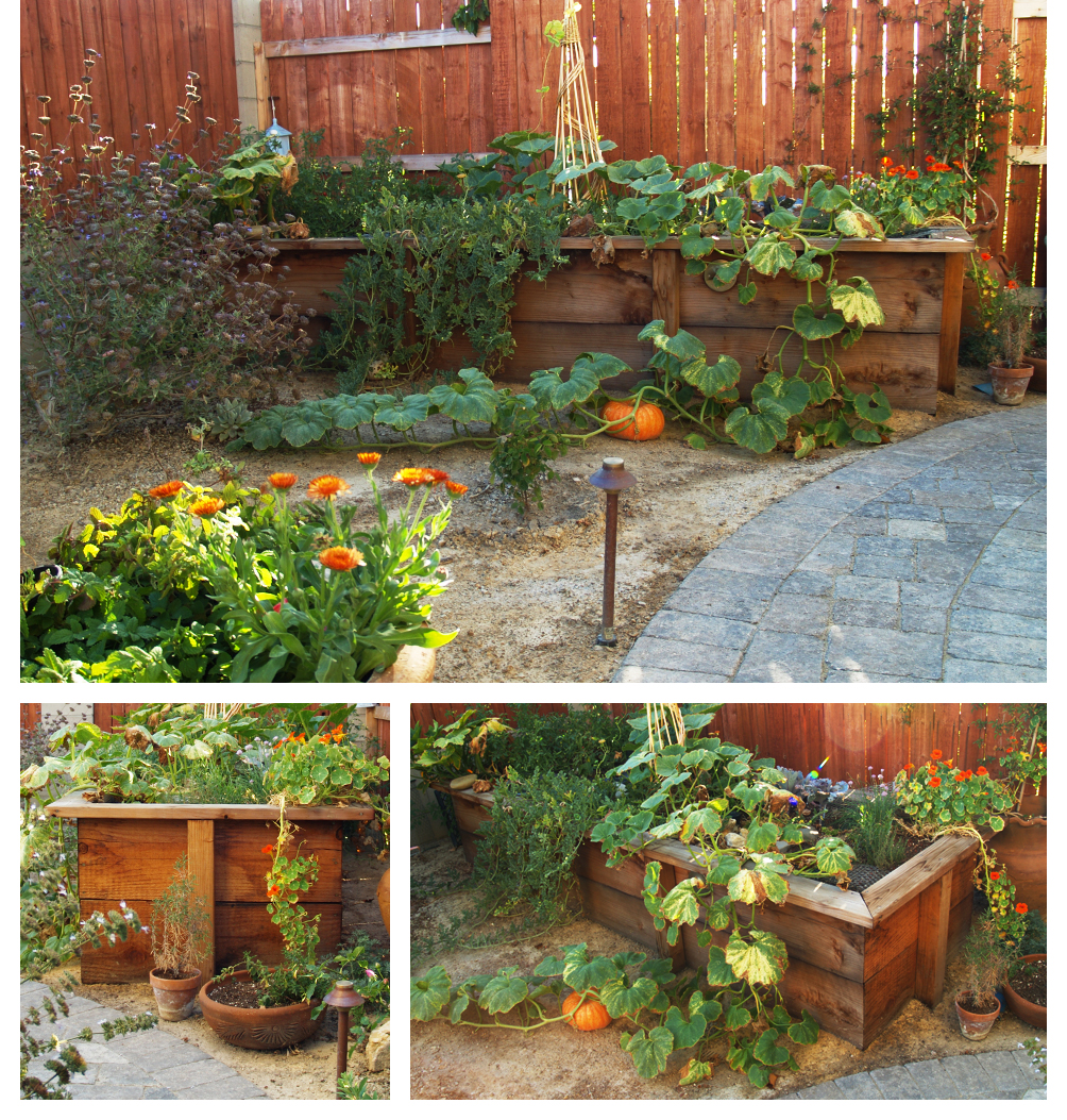 Pumpkin Planter Box and Gray Paver Patio, Lompoc