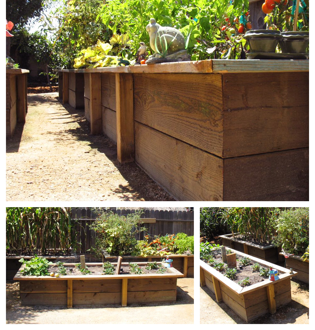 Planter Box with Tomatoes, Santa Maria